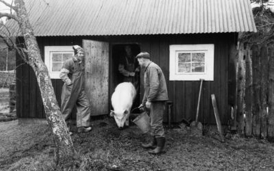 Livet på ett Muskötorp 1920-1930-talet – Del 22