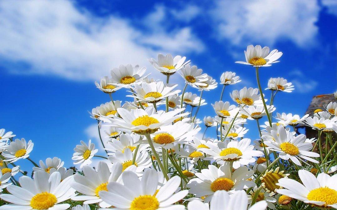 De vilda blommornas dag.