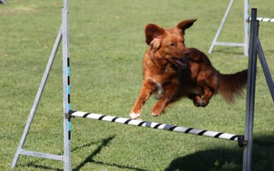 Hundfest i fyra dagar på Drömgårdens marker