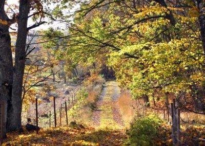 Området runt sjön erbjuder fina vandringsvägar och stigar. Foto: Johan Bjurer