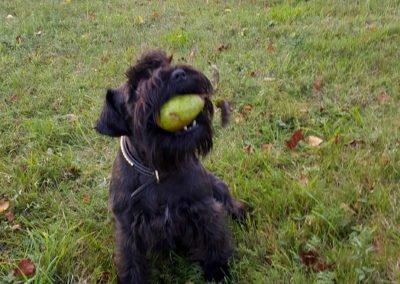 Xiri leker med fallfrukten