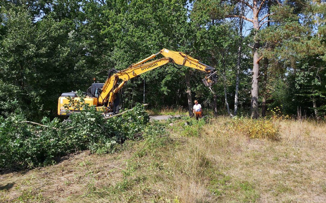 Håkan Öhman & Freddy Jaeschke jobbar med röjningen av parken. Foto: Bengt Grönkvist