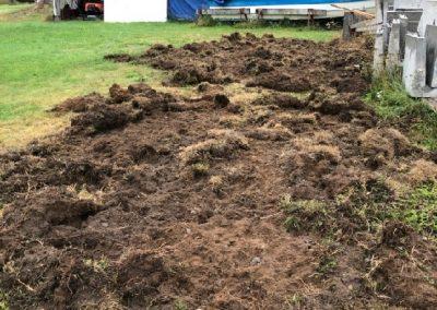 Vid Hvilan har vildsvinen bökat upp större delen av gräsmattan. Foto: Rolle Eriksson