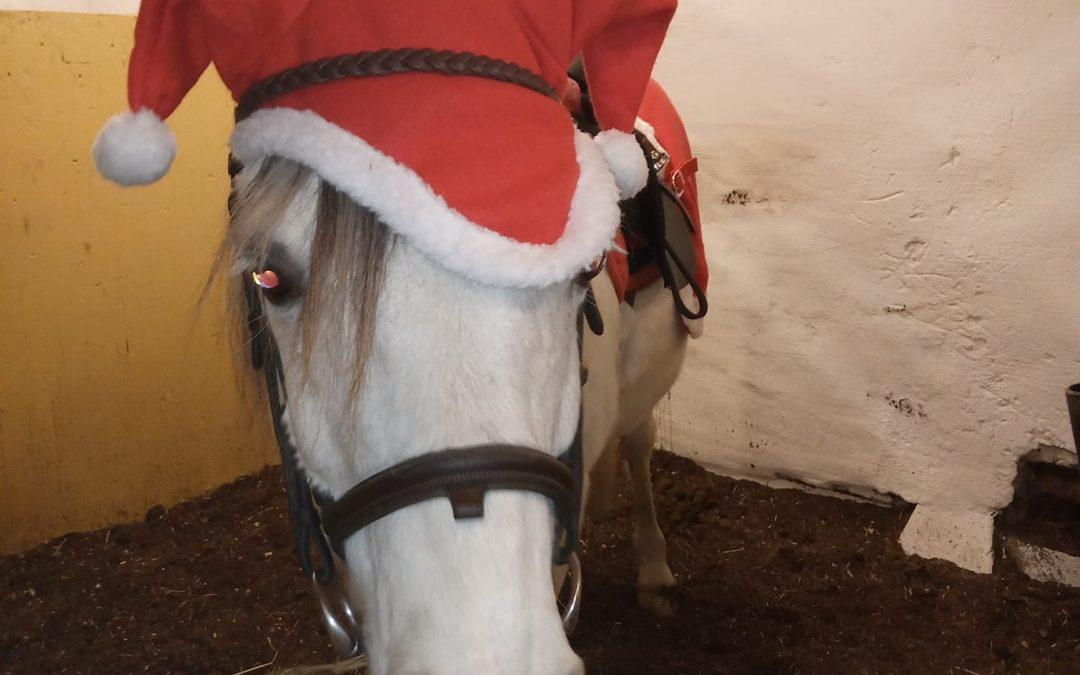 Muskö hästsportsförenings traditionella jultåg.