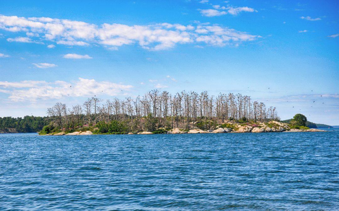 Skarvbon på en ö utanför Dalarö. Foto: Bengt Grönkvist